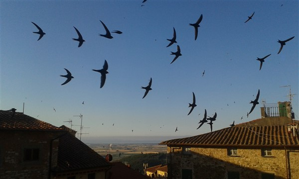campiglia_fly_past